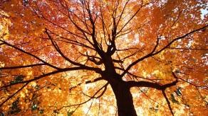 Autumn-autumn-35926505-1920-1080